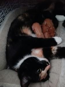 Klinkenberg kitten-2