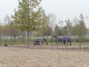 Paarden in de paddocks
